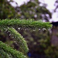 После дождя :: Сергей F