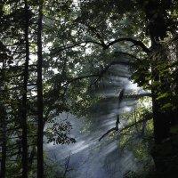 Таинственный лес :: Яна Радаева