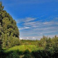 Вдоль леса :: Yuriy V