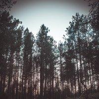 forest :: Arina Kekshoeva