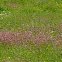луговые цветы :: Михаил Жуковский