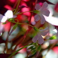 Цветы на подоконнике :: Александр Грищенко