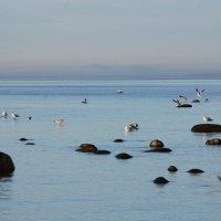 Морской пейзаж :: Николай Танаев