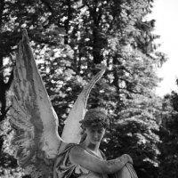 Angel :: Алексей Гимпель