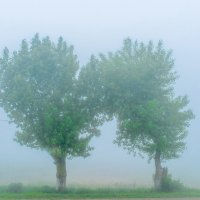 Синий туман :: Алексей Яковлев