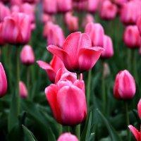 Весна-красна :: Виктор Пегета