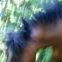 ...конь с синей гривой... :: Ольга Нарышкова