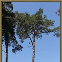 Одиночное дерево :: Константин Задоя