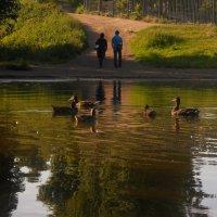 Прогулка у озера :: Евгения Глебова