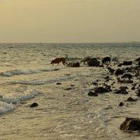 Морские псы... :: Ирина Зайцева