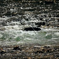 Зеленые воды речки Сарвы :: Татьяна Губина