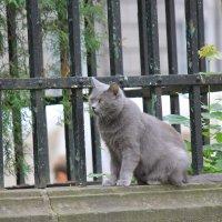 Кот на страже-2. :: Руслан Грицунь