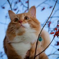 Рыжий кот :: Мария Бизунова