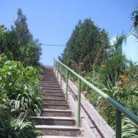 лестница к ручью :: Валентина Миленина