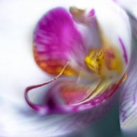 Flower :: Алексей Степин