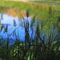 Лесное озеро :: Viktor Eremenko
