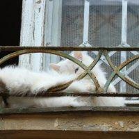 Кот лентяй-2. :: Руслан Грицунь