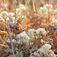 Солнечные цветы :: Виктория Велес