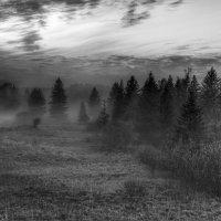 Туман в лесу. :: Александр Ломов