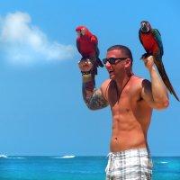 Какие красивые попугаи!))) :: Елена Остапова