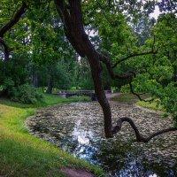 прогулка в парке :: Андрей Пашков