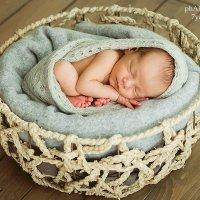 Новорожденные :: Алеся Алексеева