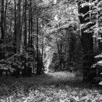 В лесу. :: Валерий Молоток