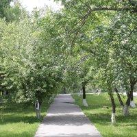 Деревья :: Оксана Домнина