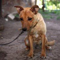 Пёс :: Dmitriy Predybailo