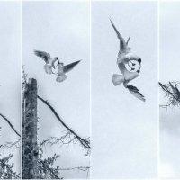 Полиптих ,,Борьба за вершину,, :: Ринат Валиев