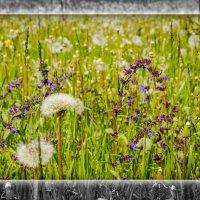 Травы луговые :: Татьяна Титова
