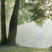 Утро у пруда :: Юрий Цыплятников