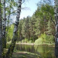 Озеро. :: Ирина Рачкова