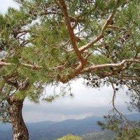 Горы Троодос. Кипр. :: Нелли *