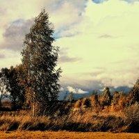 Ветер... :: Виталий Масюк