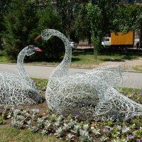 Лебеди :: Вероника Громова