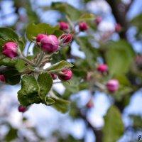Spring :: Greta St