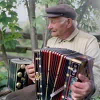 Тарногский тальянщик :: Валерий Талашов