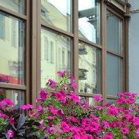 Городские цветы :: Kliwo