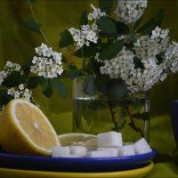 Весна с сахарком)) :: Татьяна Кретова