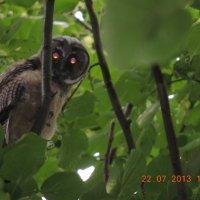 Чудо на верхушке дерева :: Дима Беркович