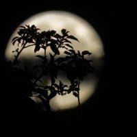 И пусть ничто не вечно под луной... :: Сергей В. Комаров