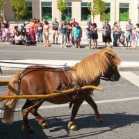 Мини-лошадь. :: Helga Olginha
