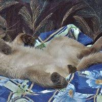 Подарок любой кошке... к 8 марта!-из серии- Кошки очарование мое! :: Shmual Hava Retro