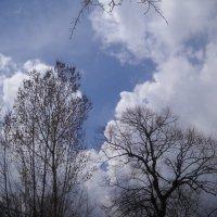 весеннее небо :: Arusia Davrisheva