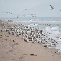 Птичий базар :: Евгений Конюхов