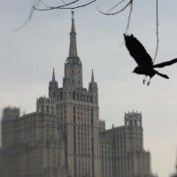 Ворона :: Мария Шуршалина