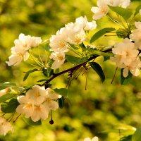 Весна :: Маргарита Зонова