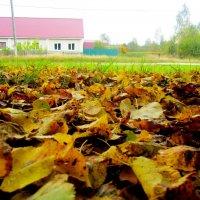 Осенняя пора :: Катя Бокова