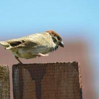 Боевая птица :: Александр Латышов